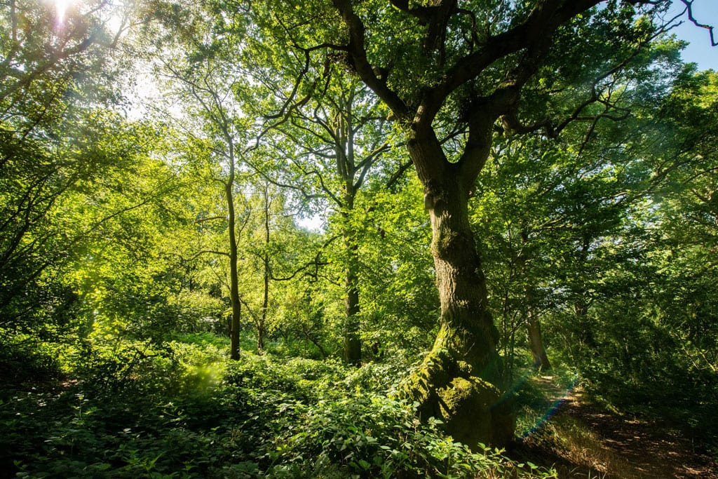 Glyn Davis Wood in Warwickshire, more than half of which will be lost to HS2 development.